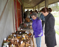 Bear Valley Fungus Fair attendees
