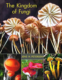 kingdom of fungi