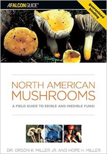 guide to north american mushrooms